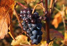 Vignobles de la Côte Chalonnaise et des Maranges