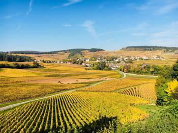 Paysages viticoles de la Côte Chalonnaise en automne