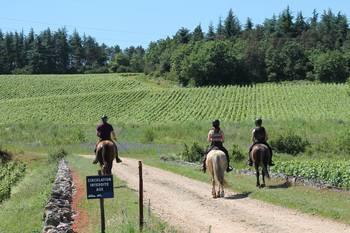 Promenade à cheval dans la Côte Chalonnaise