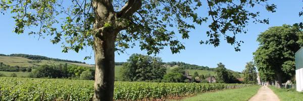 <h3>Givry Vins et Tourisme</h3>