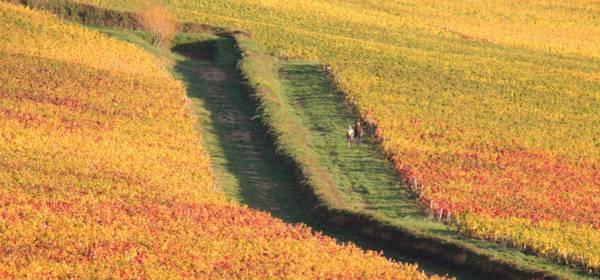 L'automne, c'est en Bourgogne ! Rendez-vous dans la Côte Chalonnaise !