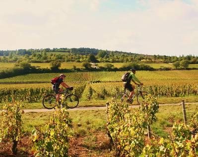 Vélo dans les vignobles de Rully