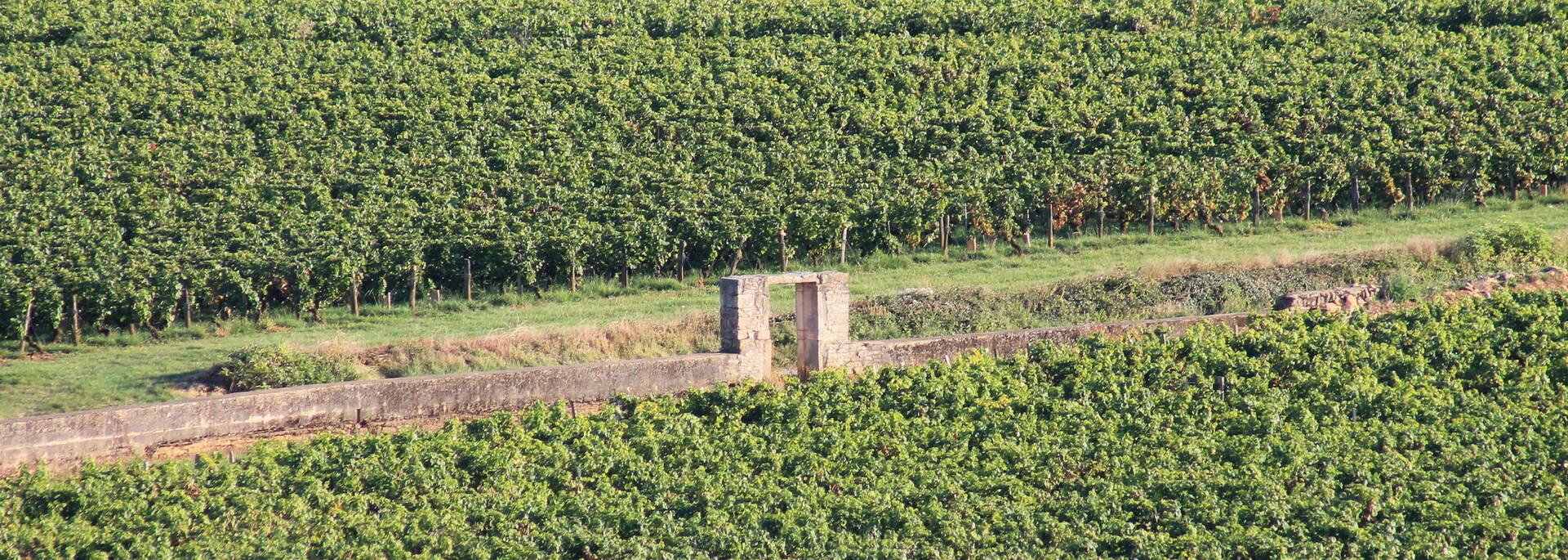 Parcelle climats Bourgogne - © Office de Tourisme