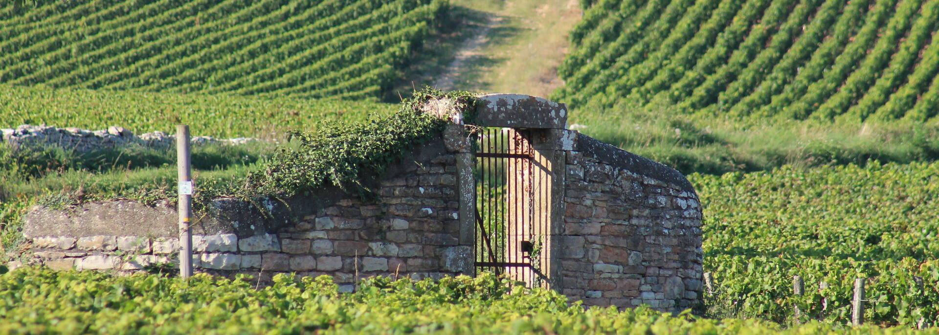 Clos climats Bourgogne - © Office de Tourisme