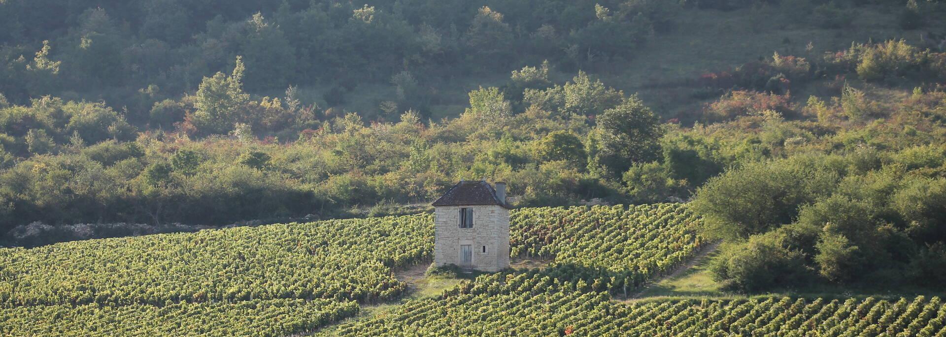 Vignobles Côte Chalonnaise - © Office de Tourisme