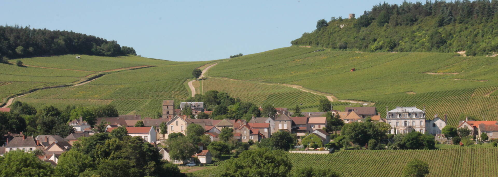 Vignobles Bourgogne - © Office de Tourisme
