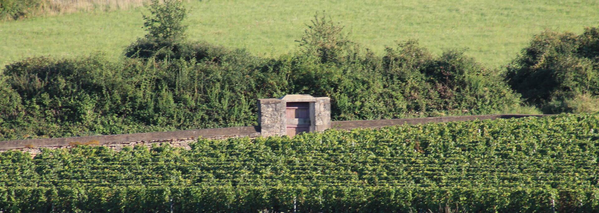 Domaine viticole @Office de Tourisme