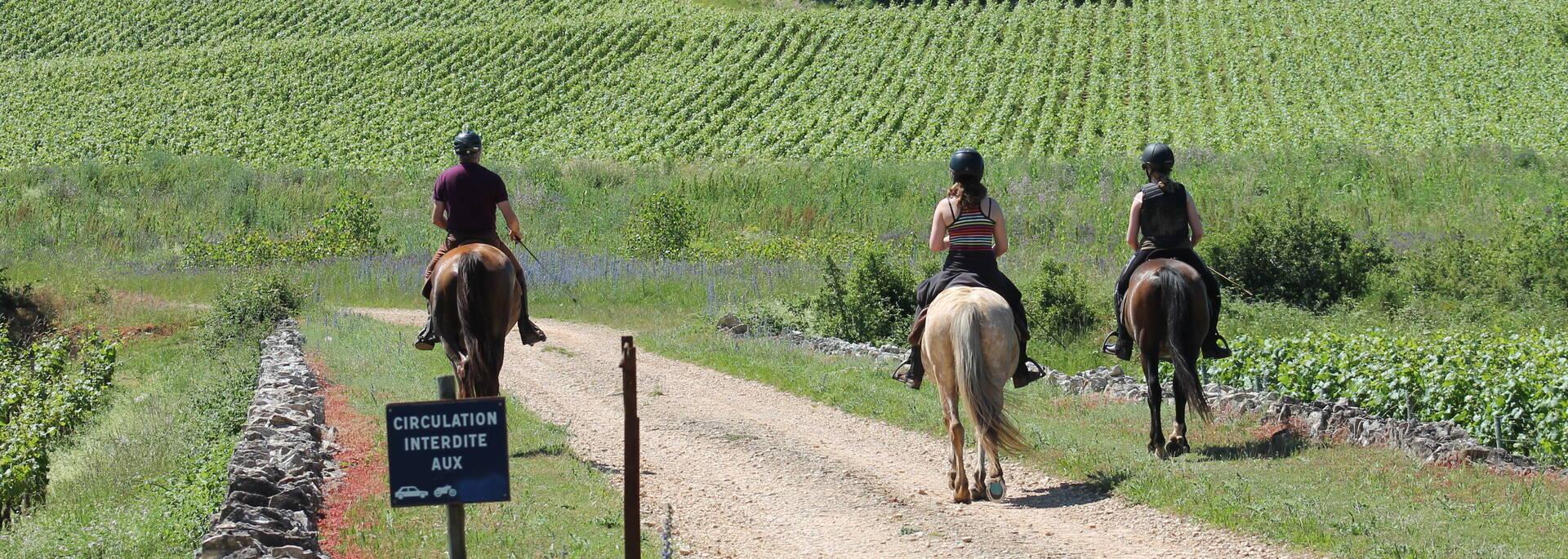 Promenade à cheval Rully Côte Chalonnaise