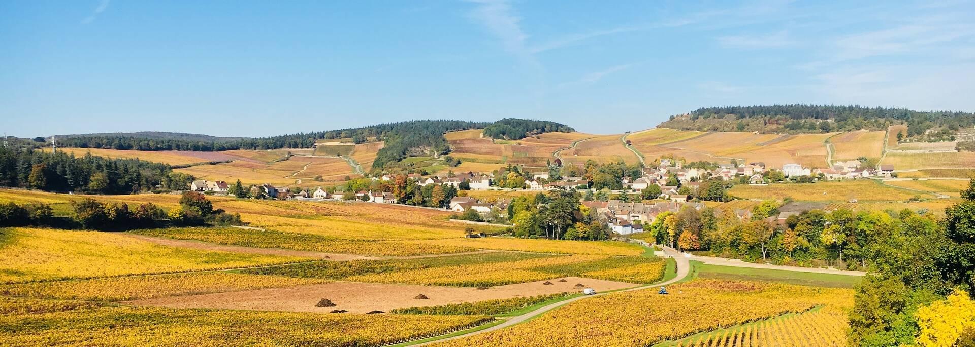 Paysages viticoles de Mercurey en Côte Chalonnaise